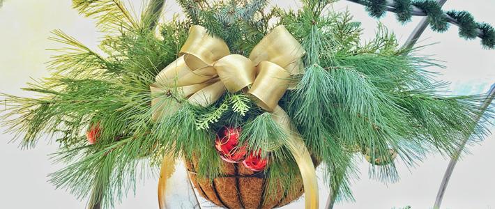 Carp Christmas baskets